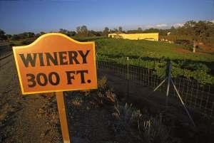 Kalifornijskie Winnice