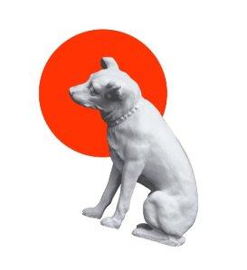 Pies Czy Suka